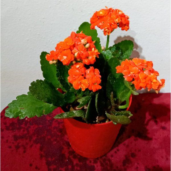 Best Indoor Flowering Plants - Florist