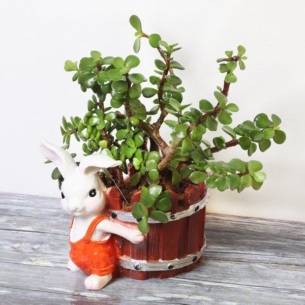 FlowerAura Jade Plant in Bunny Pot Thank You Gifts