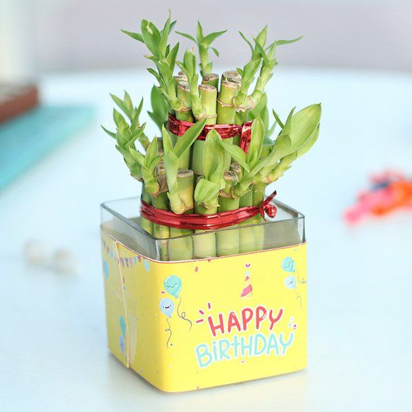 FlowerAura Bamboo Birthday Plant Personalized Birthday Gifts For Mom