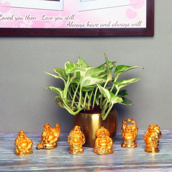FlowerAura White Pothos Plant With Buddha Unique Gifts
