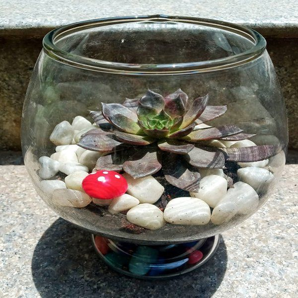 Wine Succulent Plant Gifts