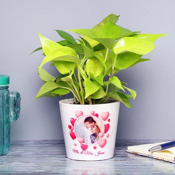 FlowerAura Personalised Love Money Plant Long Distance Relationship Valentines Day