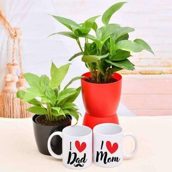 nurserylive Greet Your Mom Dad with Green Garden and Mugs Handmade Anniversary Cards For Mom And Dad