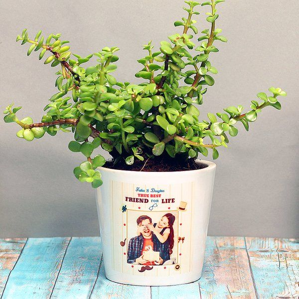 Best Gifts for Dad from Daughter a Jade Plant In a Personalized Vase