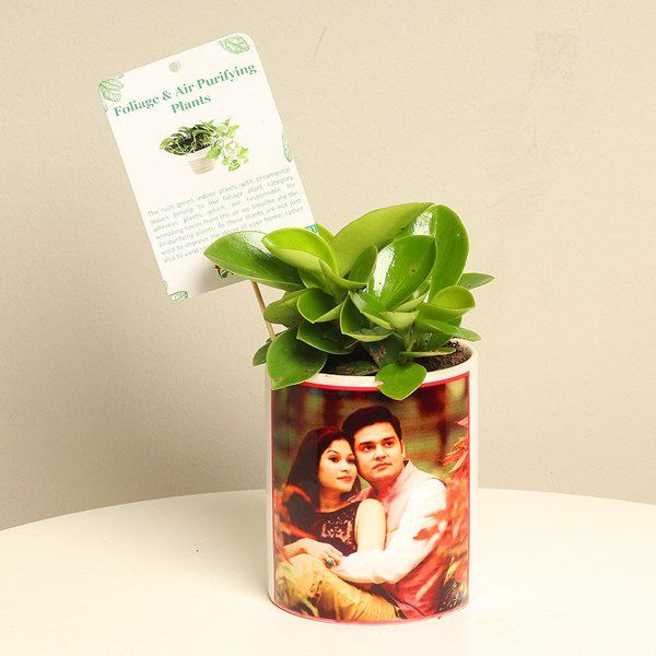 FlowerAura Love Potted Dwarf Plant First Gift For Wife