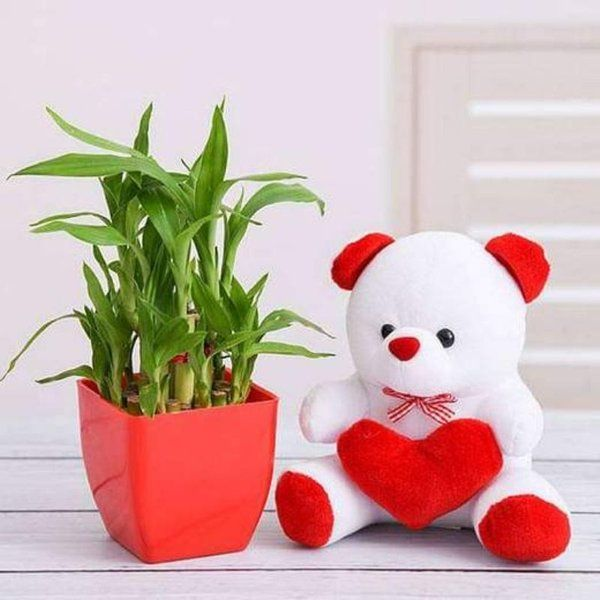 nurserylive Surprise Your Loved One with 2 Layer Lucky Bamboo and Teddy Unique Gifts For Wife