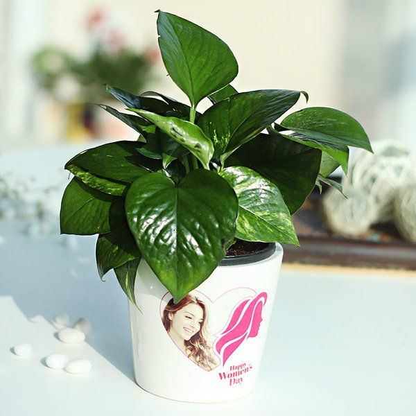 Best Personalized Mother's Day Gifts Womanly Money Plant