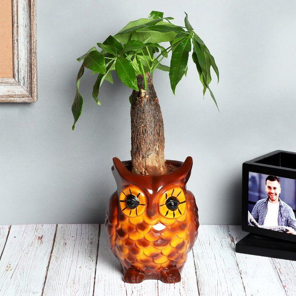 FlowerAura Lucky Money Tree In Owl Pot Gifts For Big Sister