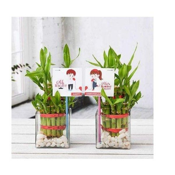 Nurserylive Celebrate Anniversary with 2 Layer Lucky Bamboo Plants Gift Ideas For Newly Married Couple